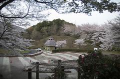 さくらの園_DSC_4733.jpg