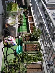 ベランダ菜園全景_KICX4805.jpg