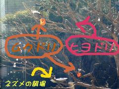 ムク&ヒヨ_文字入統合KICX3370.jpg