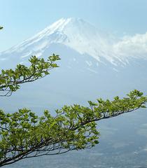 今日の富士山_DSC_0737.jpg