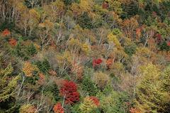 山肌_DSC_2764.jpg