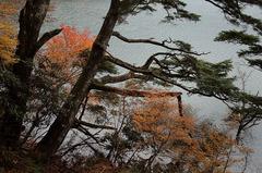 湯ノ湖_DSC_2596.jpg