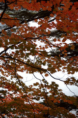 湯ノ湖_DSC_2607.jpg