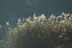 湯ノ湖_DSC_2669.jpg