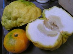 獅子柚子切断_KICX5512.jpg
