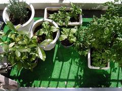 野菜全体_KICX3971.jpg