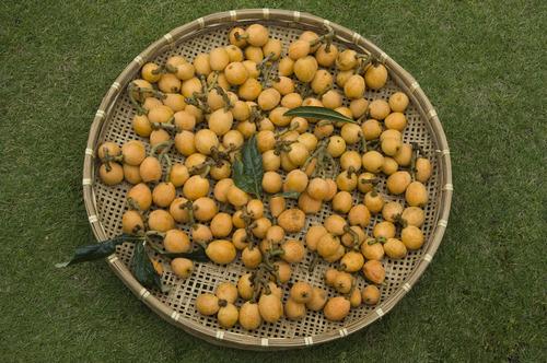 ビワの収穫_DSC_5794.jpg