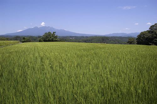 八ヶ岳_DSC_0045.jpg