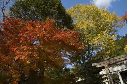 古峯神社_DSC_0069.jpg