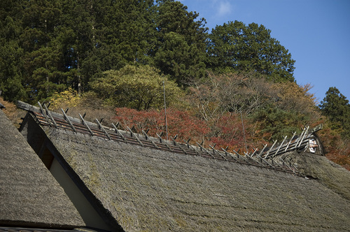 古峯神社_DSC_0086.jpg