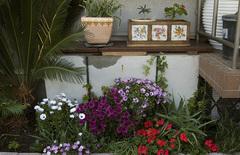 東の花壇-2_DSC_4933.jpg