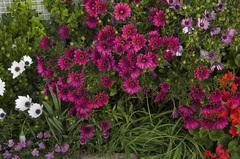 東の花壇_DSC_4842.jpg