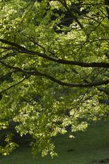 樹木_DSC_5126.jpg