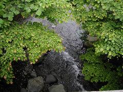 渓流俯瞰_2KICX1371.jpg