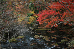 湯ノ湖_DSC_2627.jpg