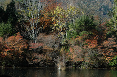 湯ノ湖_DSC_2698.jpg