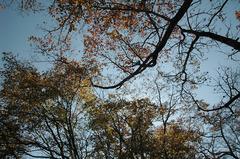 秋の空_DSC_2715.jpg