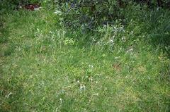 芝刈り前_DSC_5513.jpg
