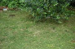 芝刈り後_DSC_5529.jpg