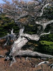 KICX2356_樹の幹.jpg